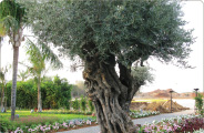 עיצוב עצים לנופים מעוצבים