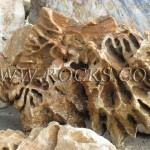 סלעים מהעולם- סלע הפרח