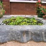 בריכה בסלע כפר הסלעים